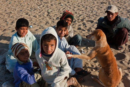 Street dog or kids best friend